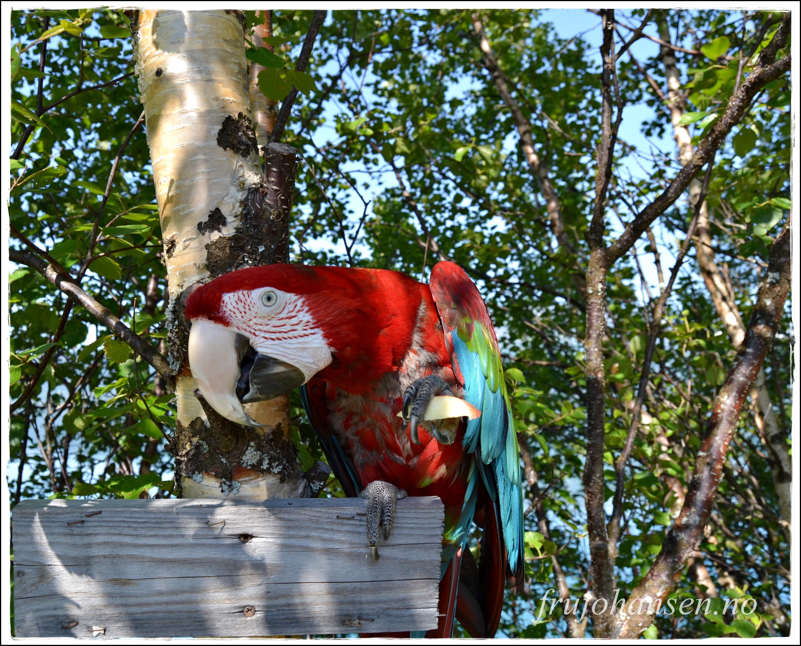 Savner papegøyen din deg når du er borte?